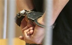 دادستان بهشهر: عوامل حیوانآزاری دستگیر شدند