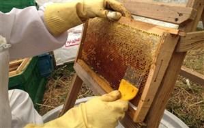 توسعه صنعت زنبورداری در استان اردبیل