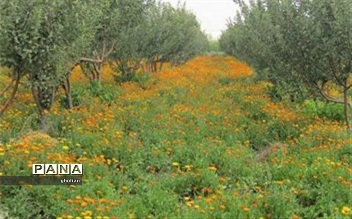 طرح احیای کلکسیون گیاهان دارویی شمالغرب کشور در استان اردبیل اجرا میشود