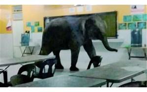 فیل خشمگین روی نگهبانش نشست!