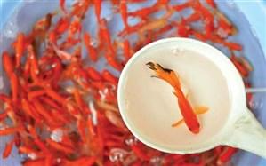 کدام استانها به کمپین  ملی نه به ماهی قرمز پیوستهاند
