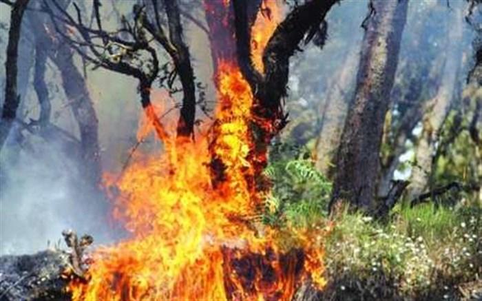 کاهش 20 درصدی آتشسوزی مناطق حفاظت شده در نیمه نخست امسال