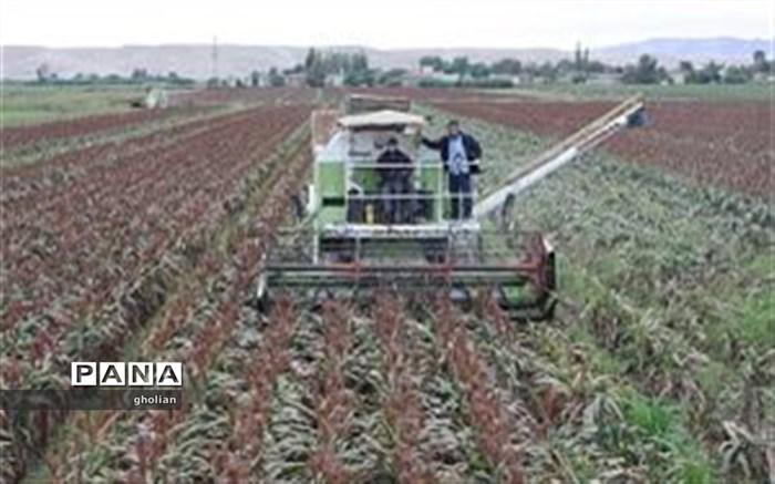 تولید سورگوم بذری