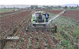 تولید کل بذر سورگوم مورد نیاز کشور در منطقه مغان استان اردبیل