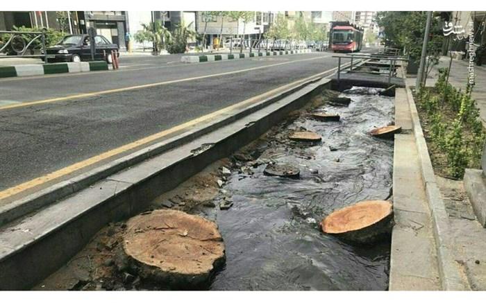 قطع درختان خیابان ولیعصر