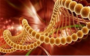 پیشگیری از ابتلا به سرطان با تغییر در شیوه استفاده از موادغذایی/ بخارپز و آب پز کردن غذا جایگزینی برای سرخ کردن مواد غذایی