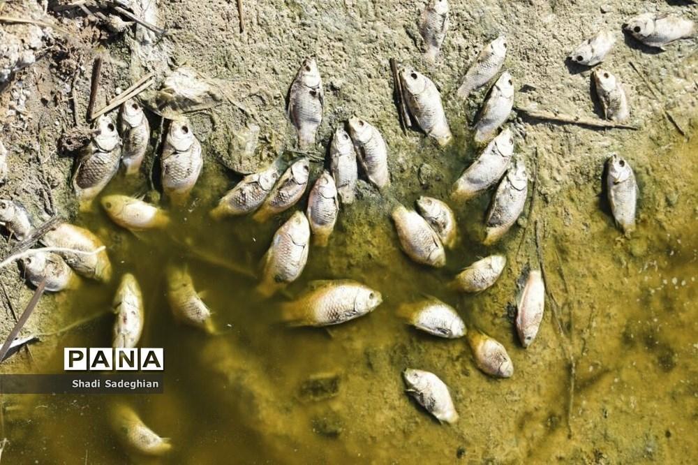 مرگ ماهی ها