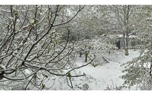تنها 3 هزار و 200 هکتاراز 16 هزارهکتار باغ آسیب دیده استان تهران درسرمای بهاری بیمه بودند