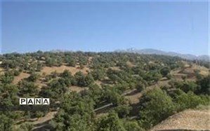 مخالفت شورای شهر و شهرداری با واگذاری پارک جنگلی یاسوج به بخش خصوصی شرکت نفت
