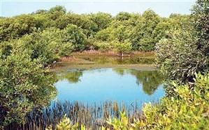 آلودگی نفتی علیه جنگل مانگرو