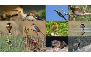 نابودی  تنوع زیستی و بحرانی که کشور را تهدید می کند