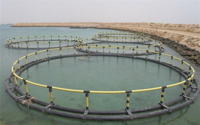 8 قفس پرورش ماهی در سواحل مازندران نصب میشود