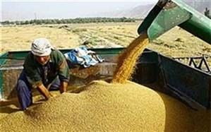 مدیرکل تعزیرات حکومتی استان گلستان اعلام کرد: جریمه ۱۱۵ میلیاردی برای قاچاق گندم در کردکوی