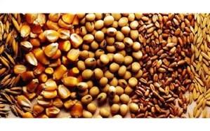 ارز ۴۲۰۰ تومانی مواد افزودنی خوراک دام و ویتامینها حذف شد
