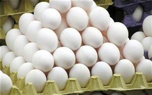 ماهانه بیش از 11 میلیون تخم مرغ نطفه دار در اردبیل تولید می شود