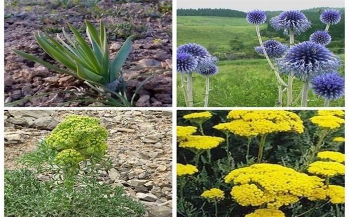 راه اندازی صنایع تبدیلی گیاهان دارویی و حمایت از سرمایه گذاران مورد توجه مسئولان استان اردبیل قرار گرفته است