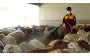 سمپاشی دامها برای پیشگیری از تب کریمه کنگو در گیلان