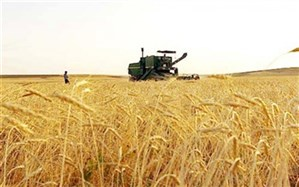 رئیس سازمان جهاد کشاورزی سیستان وبلوچستان: بیش از ۸۲درصد مطالبات گندم کاران سیستان و بلوچستان پرداخت شد