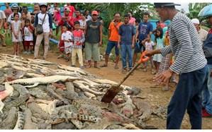 قتلعام دردناک ۳۰۰ تمساح در روستایی در اندونزی! + تصویر
