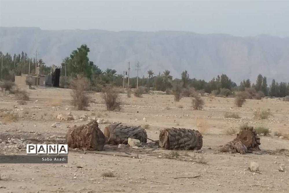 دشت گله دار در حصار خشکسالی
