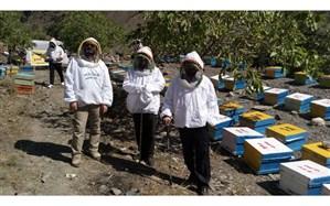 شروع برداشت عسل از سطح زنبورستانهای نیشابور