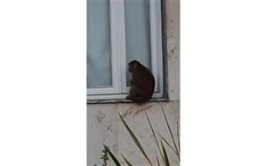 حمله میمون بازیگوش به آرایشگاه زنانه+عکس