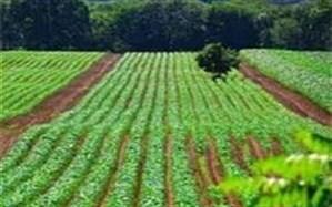 ارقام جدید محصولات کشاورزی در اردبیل رونمایی شد