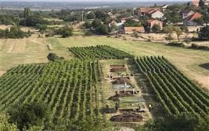 کشف بقایای پنیر ۷۲۰۰ ساله در کرواسی + عکس