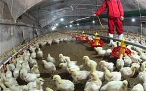 کنترل ۹۹ درصدی آنفلوآنزای فوق حاد پرندگان