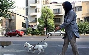 اپیدمی سگها؛ عدم توانایی  برقراری ارتباط با همنوع و ارتباط با زبان بستهها