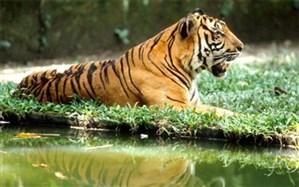 با باغ وحش های 4 مقصد دبی ، مالزی،  تایلند و کیش آشنا شوید!
