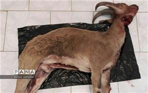 دستگیری دو شکارچی سابقه دار در اردستان