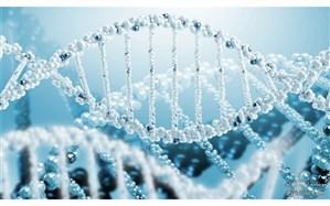 دومین دوره کارسوق مهندسی ژنتیک برگزار میشود