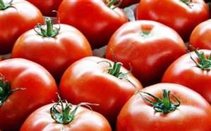 مدیر توسعه بازرگانی سازمان جهادکشاورزی آذربایجان شرقی:  صادرات محصول گوجه فرنگی گلخانه ای بلا مانع است