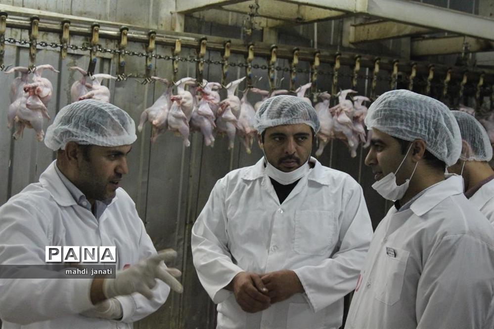 بازدید خبرنگاران از کشتارگاه صنعتی مرغ بهاران