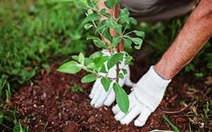 کاشت 35000 درخت توسط دانش آموزان شهرستان در هفته منابع طبیعی