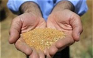 سازمان فائو در پروژه توسعه پایدار تولید دانههای روغنی ورود پیدا کرد