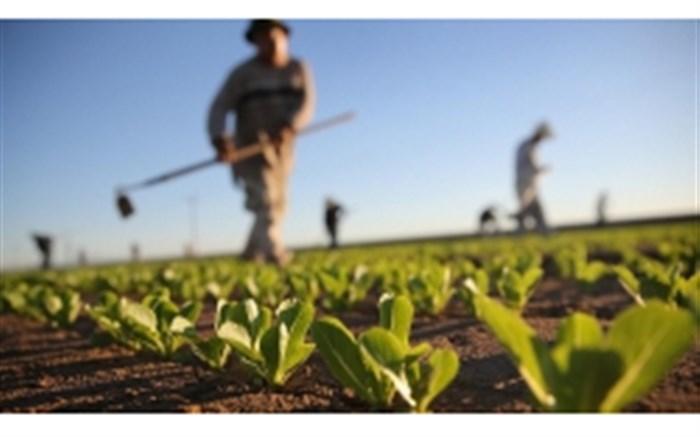 ملکشاهی و ظرفیت فراموش شده حوزه کشاورزی/ از نبود صنایع تبدیلی تا لزوم ایجاد سیلوهای مناسب