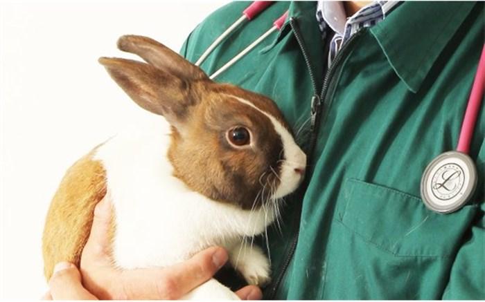 «پت و کلینیک» حلقه مفقوده صاحبان حیوانات خانگی و دامپزشکان