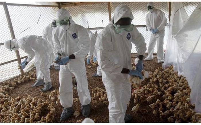 ۱۰ کانون به آنفلوانزای پرندگان آلوده شده است