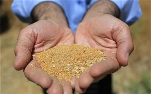 رئیس مرکز تحقیقات و آموزش کشاورزی و منابع طبیعی استان اردبیل:۵ رقم جدید غلات و دانههای روغنی در اردبیل رونمایی شد