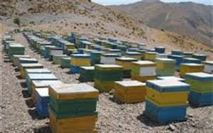 انجام عملیات سرشماری کندوهای زنبورعسل در شهرستان چاراویماق