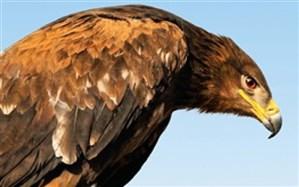مسبب  کشتار عقاب و سارگپههای فارس بازداشت شد