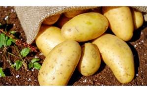 چه قسمتی از سیب زمینی را نباید مصرف کنیم
