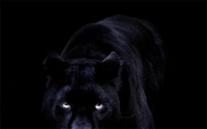 شبه سیاه