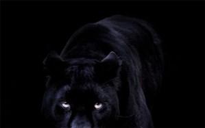 راز شبح سیاه شب های روستا حل شد