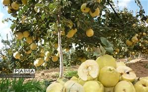 برداشت بیش از 3000 تن میوه به از باغات نی ریز
