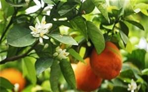تاثیر آب نارنج بر فشار خون