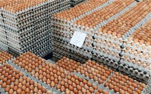 توزیع تخم مرغ با قیمت مصوب درالبرز