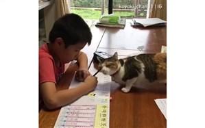 دردسرهای دانش آموز ژاپنی با گربه بازیگوشِ خانگی